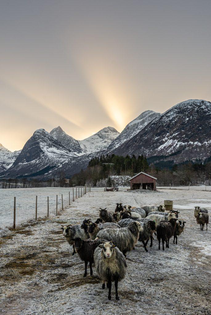 Foto: © Svein Kvakland