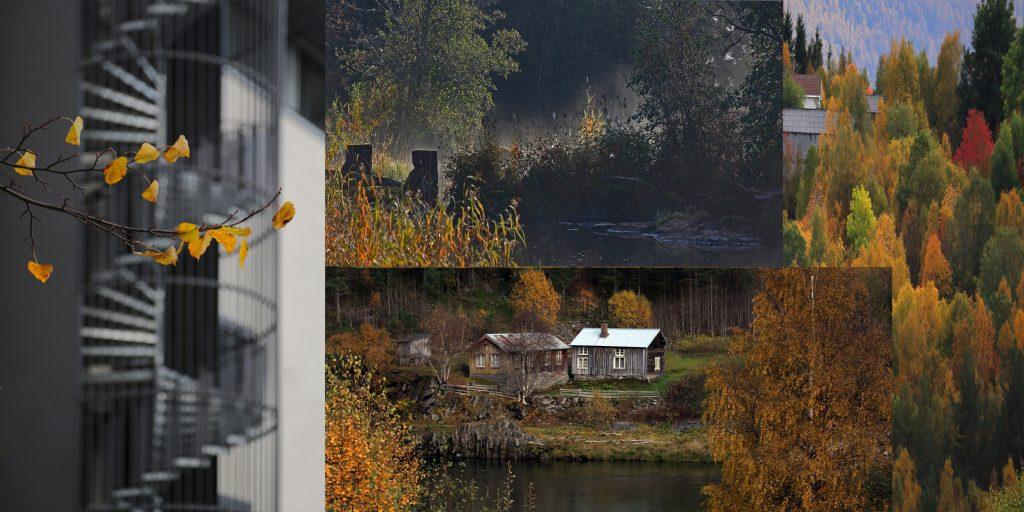 """Foto: © Øystein Wiik, """"Høsten"""""""