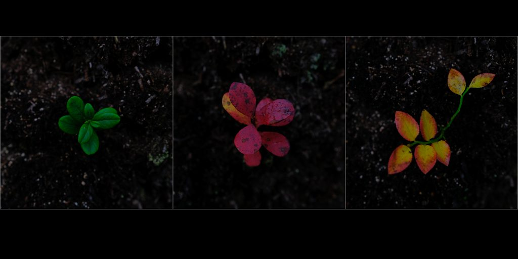 """Foto: © Bjørn Ivar Haugen, """"Oktober lyng"""""""