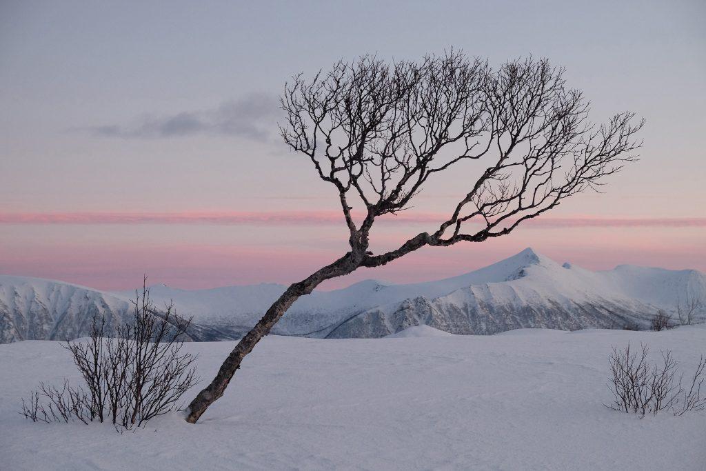 """Foto: © Belinda Renèe Dragset, """"Vinter på Gisløya"""""""