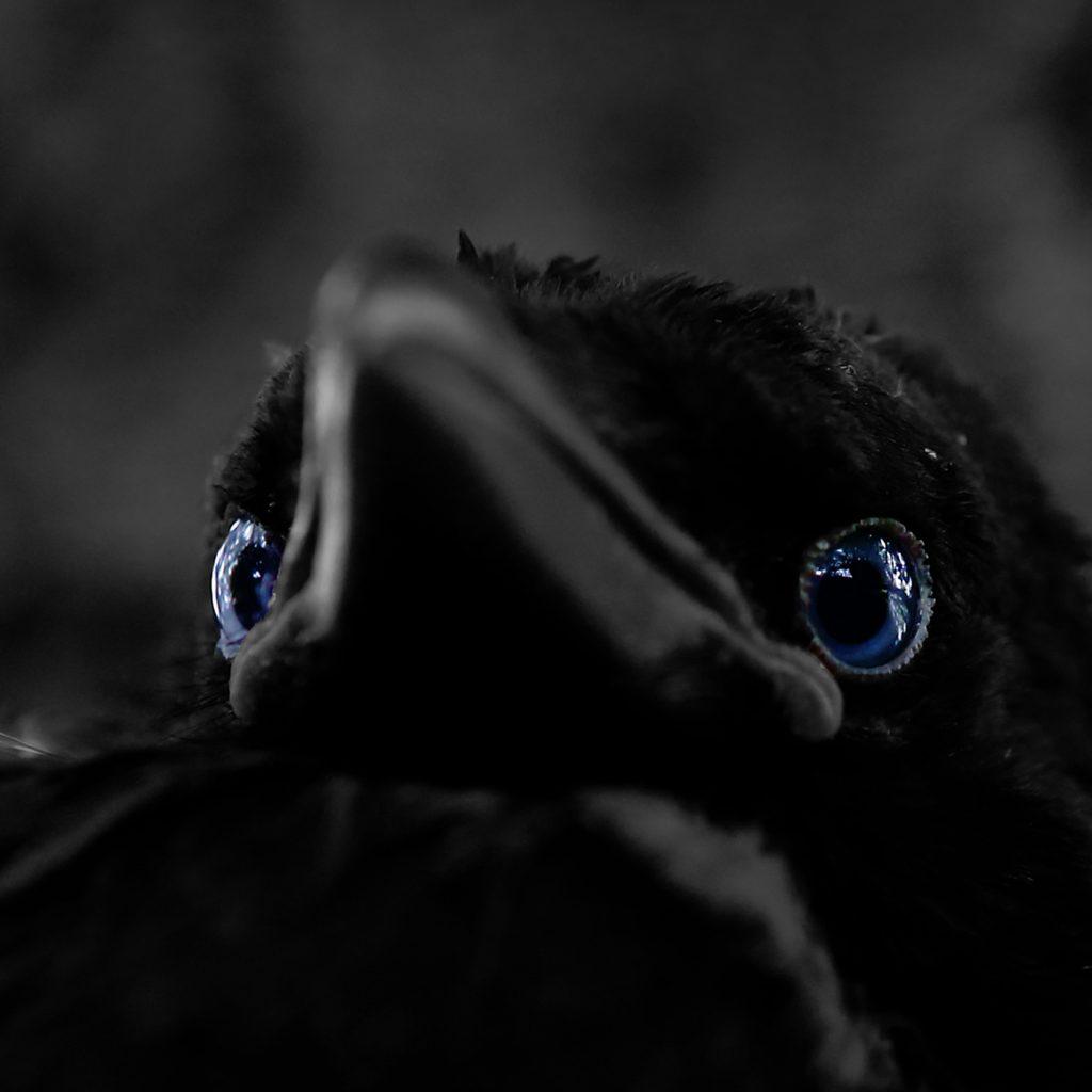 "Foto: © Øystein Wiik, ""Blå øyne"""
