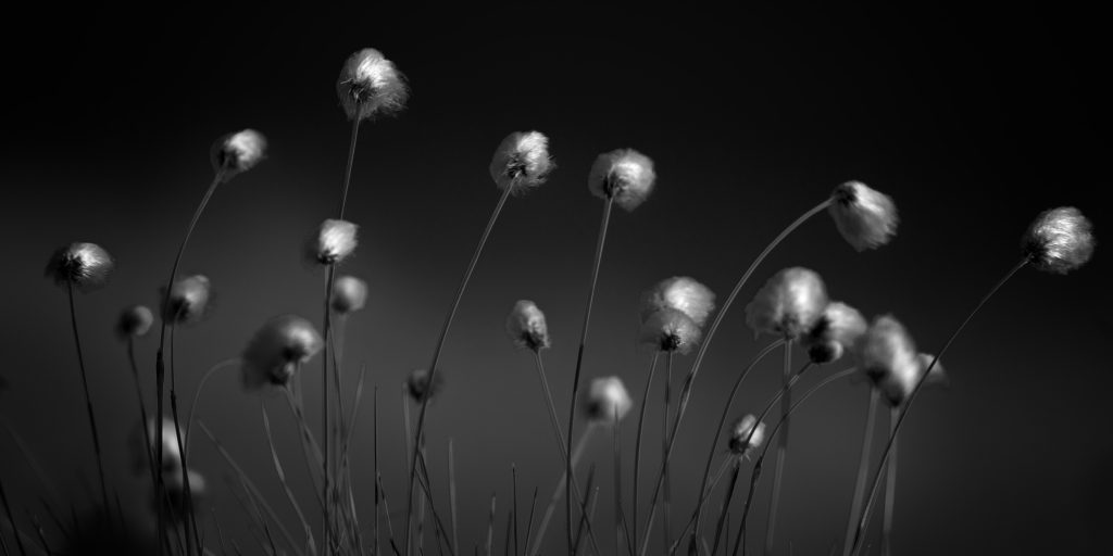 "Foto: © Roar Bech, ""Myrull"""