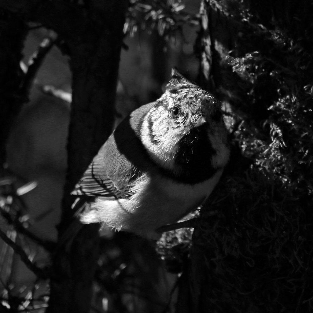"""Foto: © Norunn Bolstad, """"Bare i sort hvitt"""""""