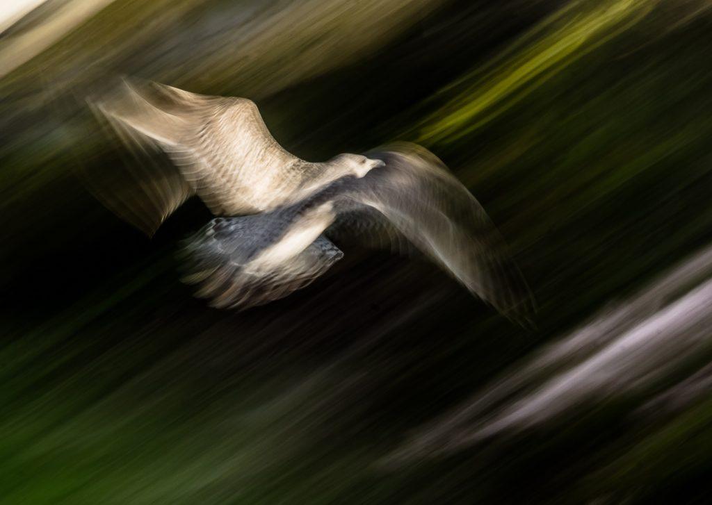 Foto: © Eva Frisnes, «På flukt»