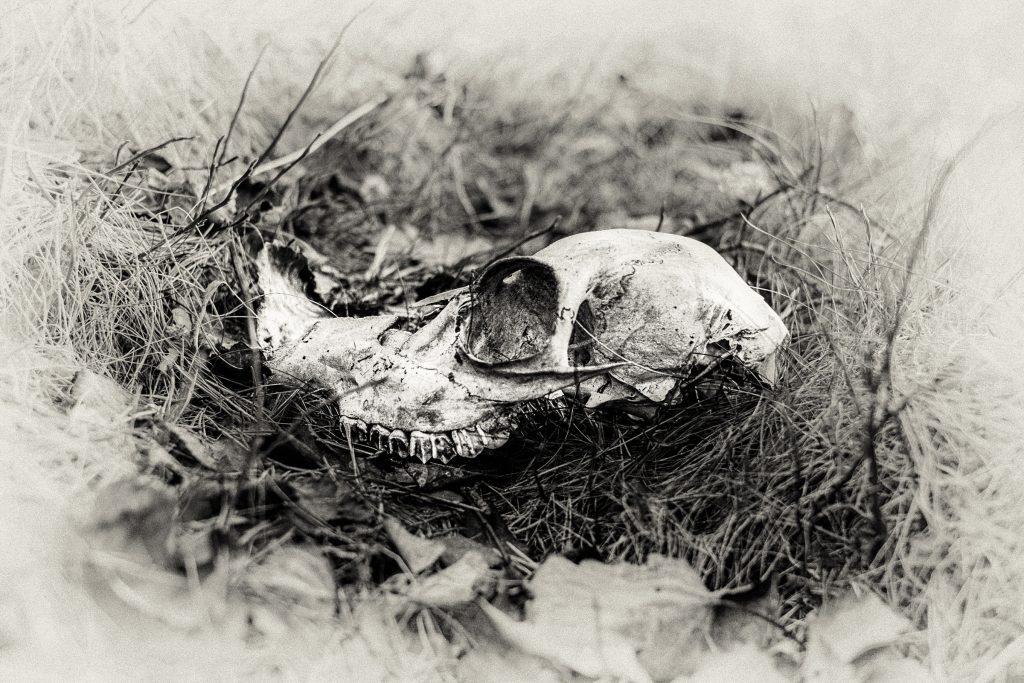 """Foto: © Leif Erling Aasan, """"Åpen grav"""""""