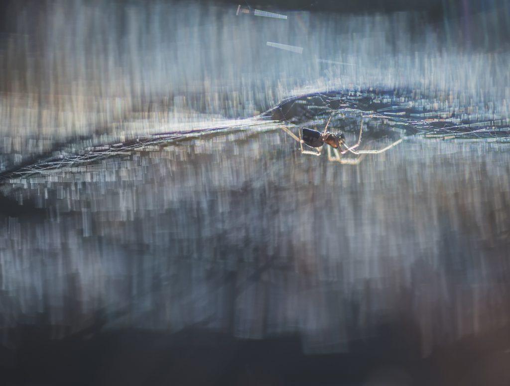 """Foto: © Eva Frisnes , """"Lille Petter edderkopp"""""""